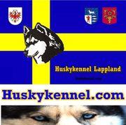 Huskykennel - GetWet